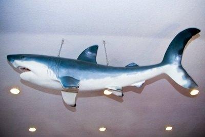 shark-05